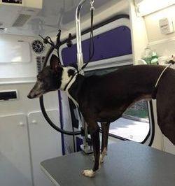 My dog Von in the van.